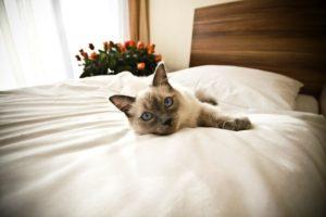 Отели, где разрешается проживать с домашними животными